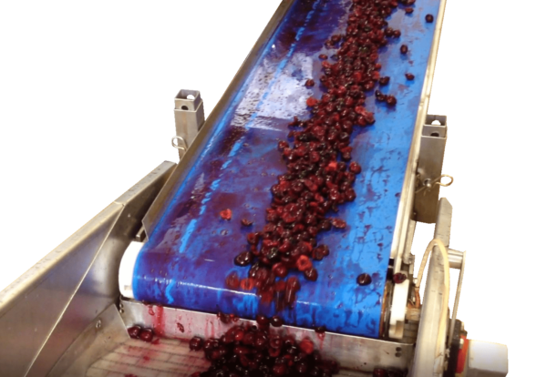 tapis convoyeur a bande fruit legume