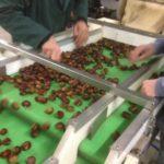 tapis de triage chataigne noix cerneaux