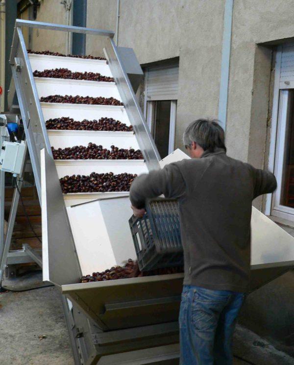 tapis elevateur fruit legume chataigne
